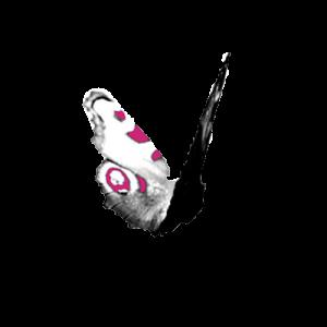 sommerfugl_stor